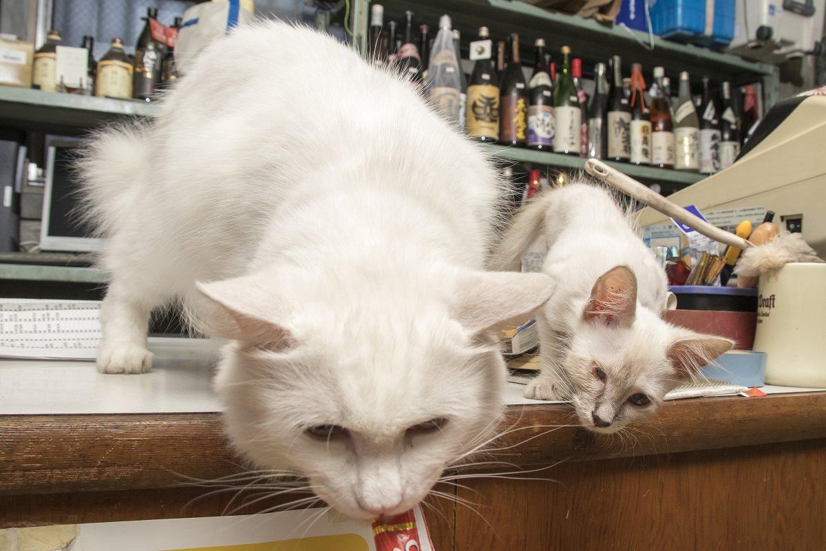 友達んちの猫 5