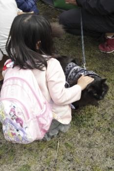 blackcat-saku
