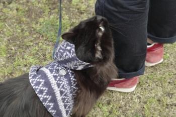 blackcat-saku2