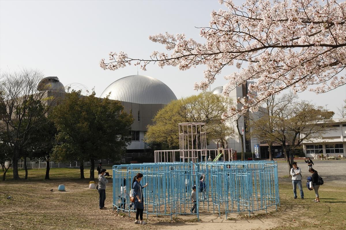 近所の公園で桜撮影 EOS Kiss M